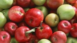İnguşetya 14 ton elma hediye etti