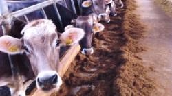 Kabardey-Balkar heyetinden çiftlik ziyareti