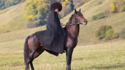Türkiye'ye Karaçay atı yok!