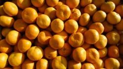 Abhazya'nın Rusya'ya mandalina ihracatı arttı