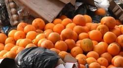 Türkiye'den gelen portakallar buldozerle ezildi