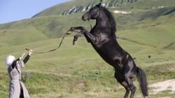 Bahreyn Karaçay atları ile ilgileniyor