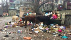 Kuzey Kafkasya'da toplanmayan çöpler problem oluşturuyor