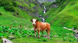 Abhazya'nın doğa cenneti: Ritsa Milli Parkı