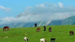 Doğal güzelliğiyle Çeçenya'dan manzaralar