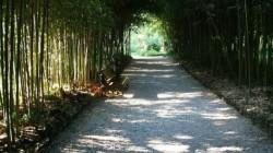 Sohum Botanik Parkı 175 yaşında