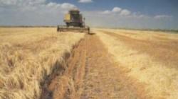 İnguşetya tarımda verimlilikte Rusya'da ikinci sırada