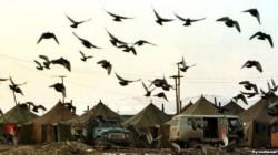 İnguşetya sivil toplum örgütleri: Mülteci sorununu çözün