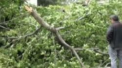 Soçi'de şiddetli rüzgar ağaçları devirdi