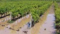 Adıgey'de şiddetli dolu yağışının faturası 70 milyon ruble